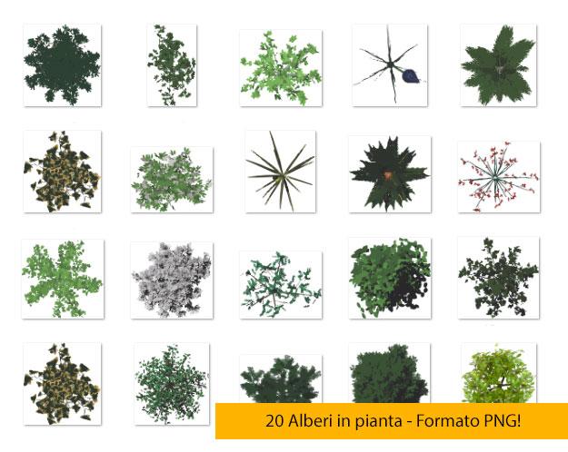 20 Alberi in pianta PNG!